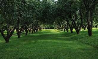 Лес в Коломенском