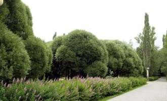 Лесная зона Измайловского парка