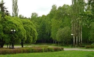 Лесная зона в Измайловском парке