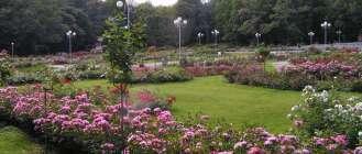 Розарий в Ботаническом саду