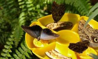 Дом бабочек в ВДНХ